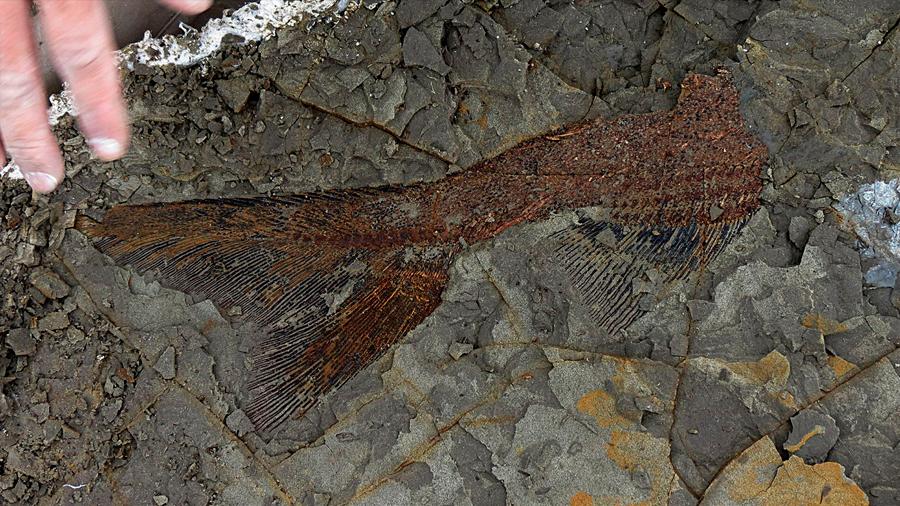 Hallan a las primeras víctimas del meteorito que acabó con los dinosaurios