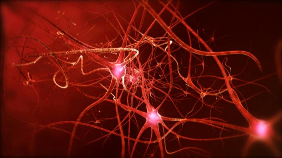 Demuestran que alterar el reloj circadiano previene enfermedades neurodegenerativas
