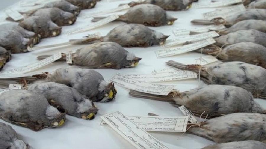 La iluminación de los edificios es letal para algunas aves migratorias