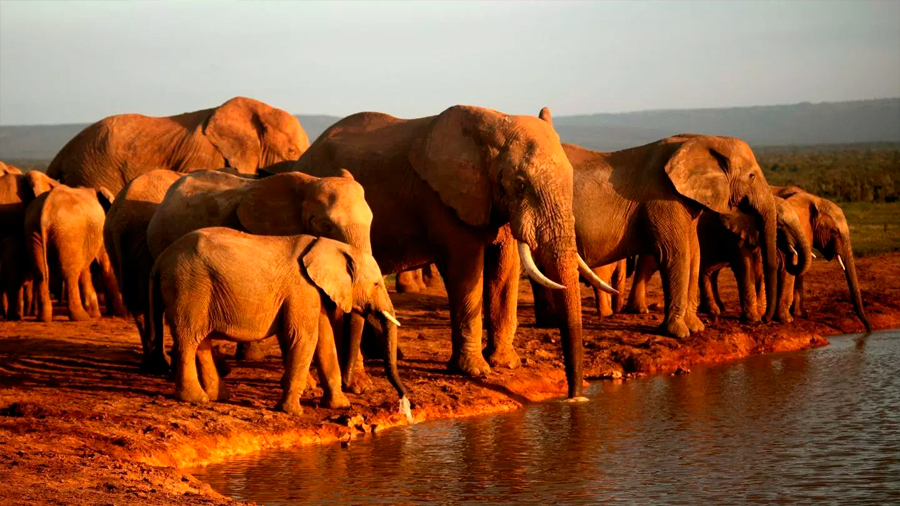 Identificados los centros mundiales de sobreexplotación de especies