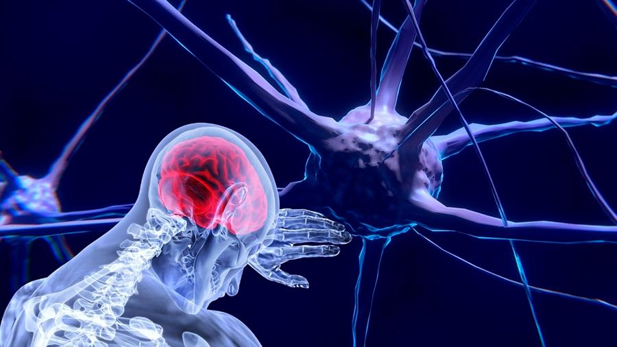 Descubren la fuente de nuevas neuronas en el hipocampo cerebral