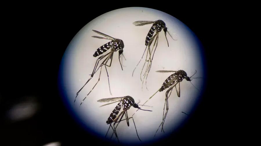 Los mosquitos pican menos si escuchan ¡música de Skrillex!