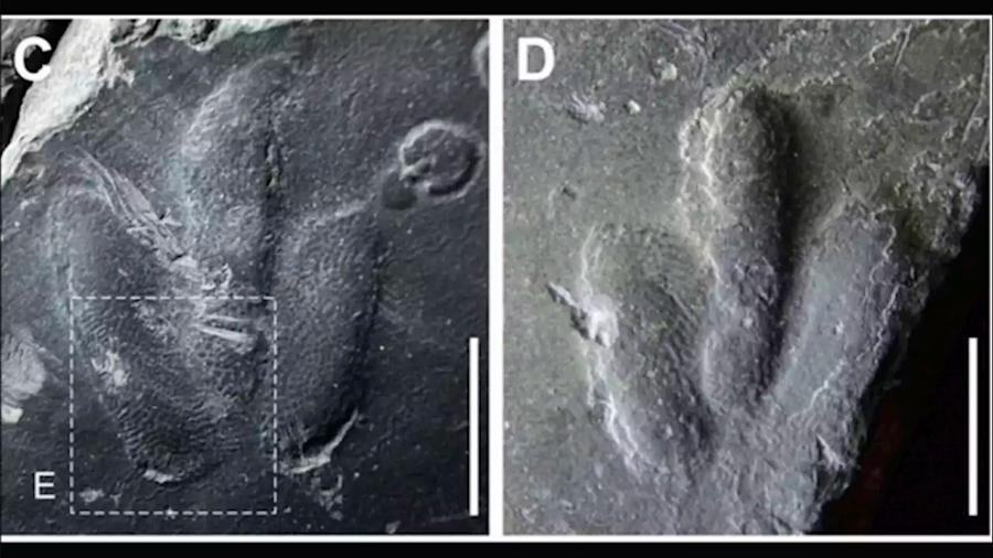 Por primera vez hallan impresiones de la piel de un dinosaurio perfectamente preservadas