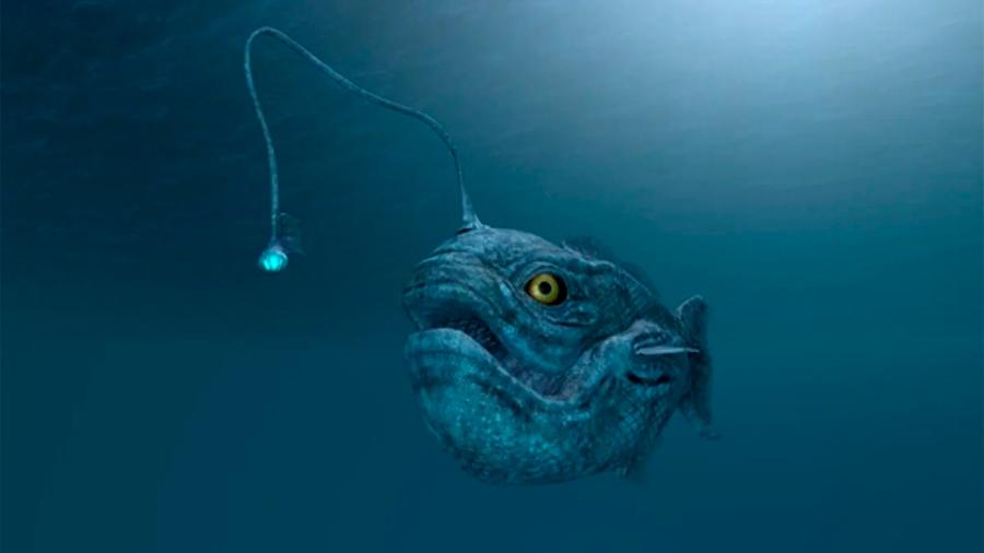 Solo se conoce el impacto ecológico del 6% de las especies exóticas marinas