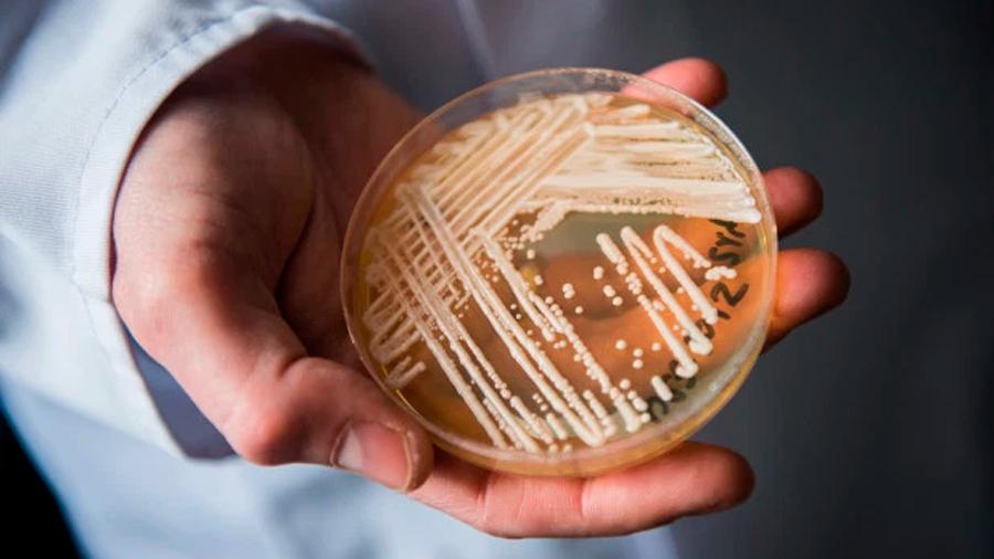 Llega a América Latina Candida auris, el misterioso hongo que resiste medicamentos y se expande por el mundo