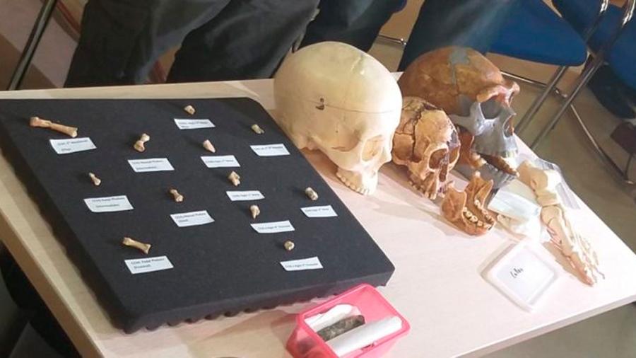 Nueva especie de humanos fue descubierta en una cueva de Filipinas
