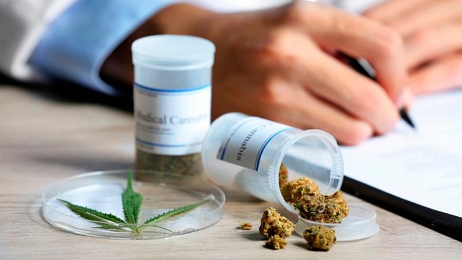 Uruguay: empresas de cannabis medicinal se agrupan para impulsar I+D