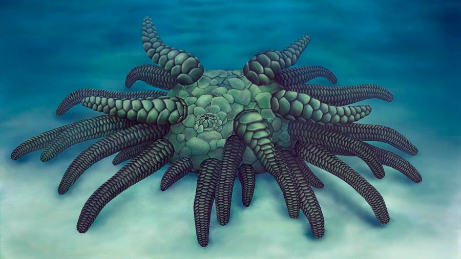Un pepino de mar ancestral era como el ficticio monstruo de Cthulhu