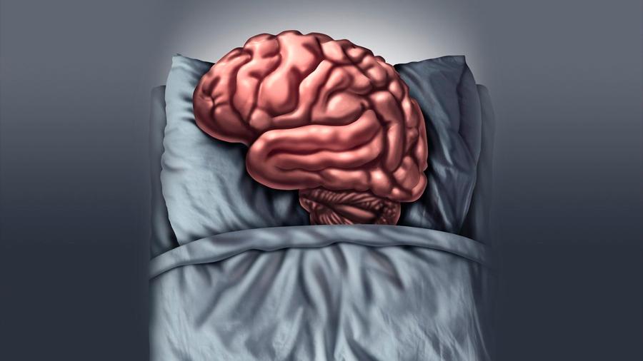 Científicos descubren las ondas cerebrales que explican la sensación de ira mientras dormimos