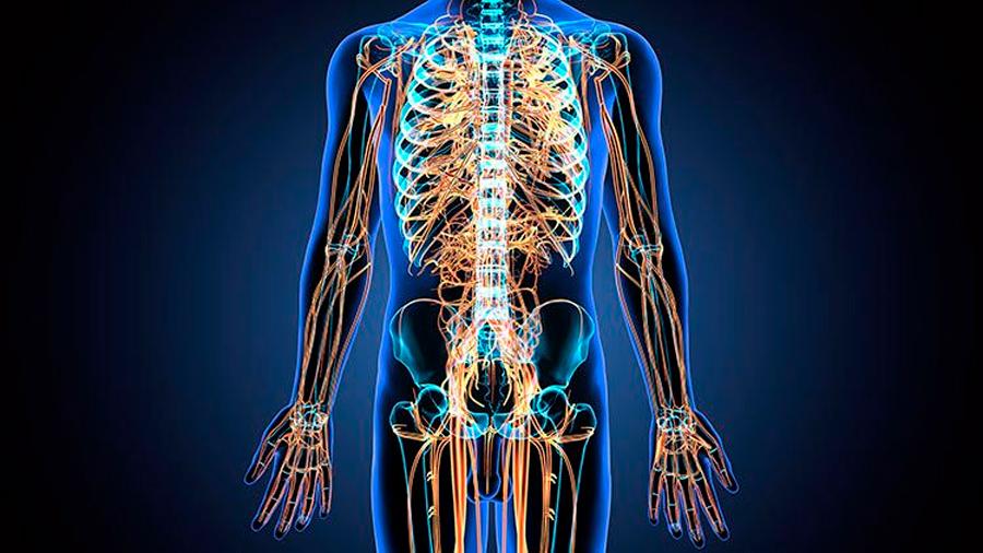 El sistema nervioso periférico dañado es capaz de repararse a sí mismo
