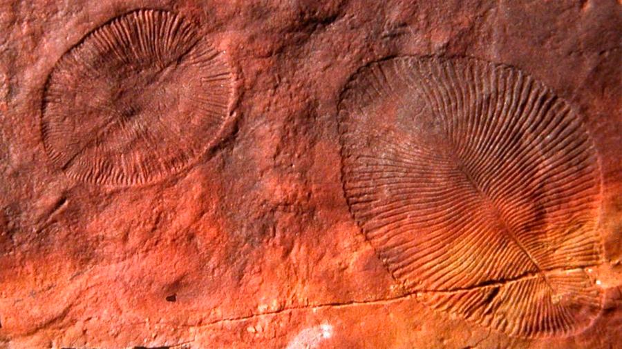 El posible animal más antiguo jamás encontrado se vuelve aún más misterioso