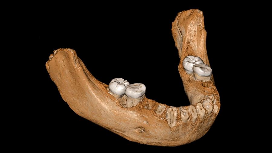 Hombre de Denisova vivió en meseta tibetana hace al menos 160 mil años