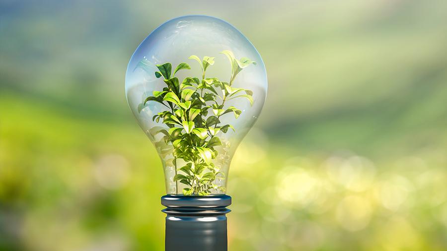 Desarrollan un sistema que aprovecha la electricidad producida por las hojas de las plantas