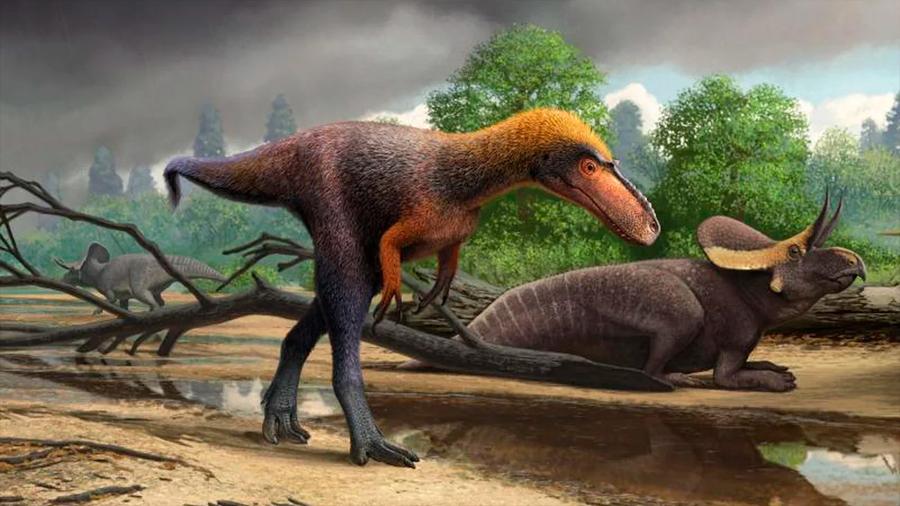 Descubren un pariente del 'Tyrannosaurus rex' de menos de un metro de altura