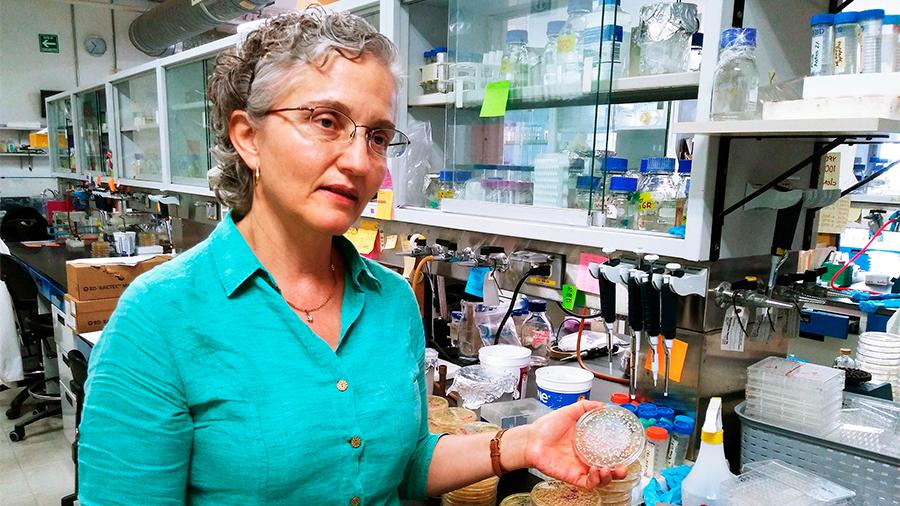 Patentan científicos mexicanos método de diagnóstico para infección en torrente sanguíneo