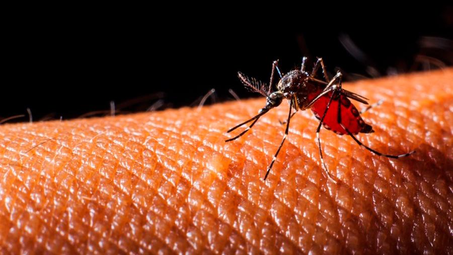 Mexicanos crean Bioinsecticida que inhibe desarrollo del mosquito transmisor de zika y dengue