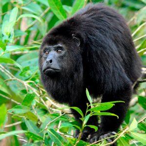 La caza acabará con el 40% de los grandes mamíferos de las áreas tropicales