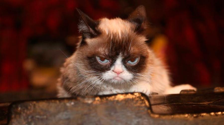 Adiós a 'Grumpy Cat': la gata más famosa de Internet muere a los 7 años de edad