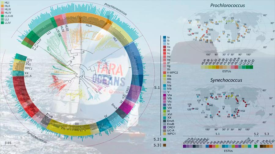 El primer mapa global de distribución de fitoplancton desafía teorías