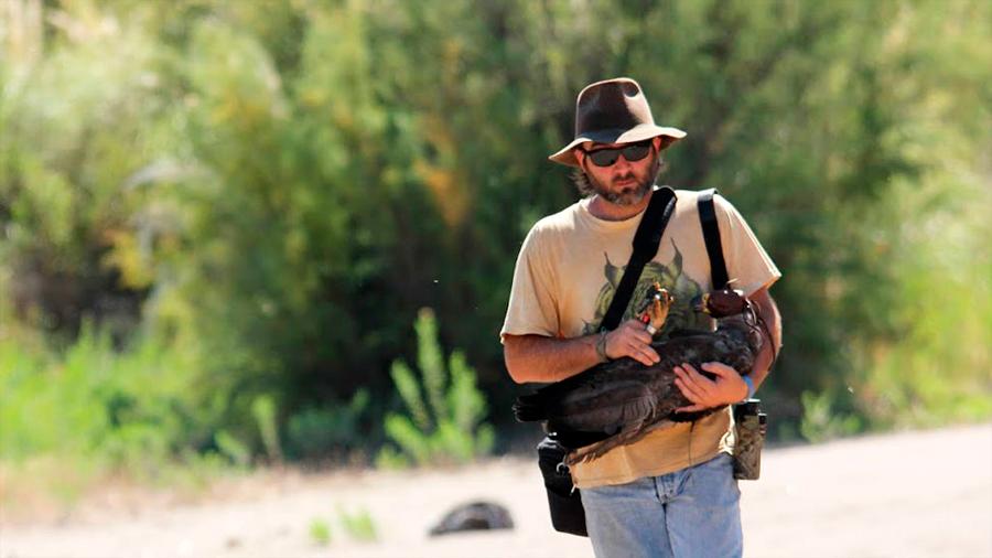 Científico argentino recorre miles de kms para proteger al águila del Chaco, de las más misteriosas de Sudamérica
