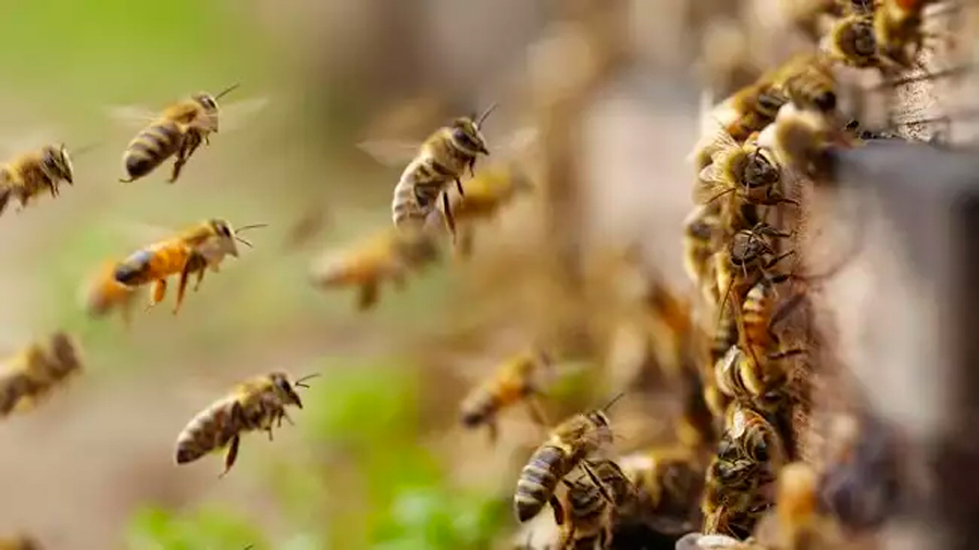 Expertos internacionales alertan de la pérdida de cultivos por la falta de abejas