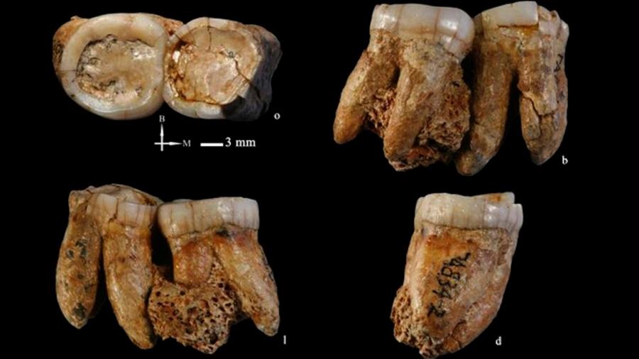 Paleontólogos chinos descubren fósiles humanos de 300.000 años de antigüedad