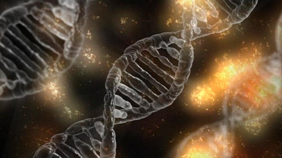 La organización espacial del ADN se forma primero, luego el resto