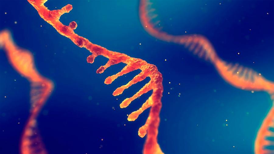 Hallan nuevas causas de autismo en el ADN 'basura'