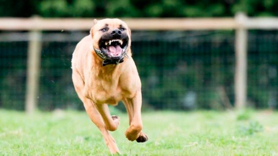 Investigadores identifican cuáles son los perros más peligrosos para los niños