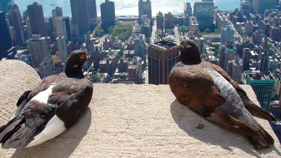 Los pájaros que viven en las ciudades prefieren mudarse a los barrios más ricos