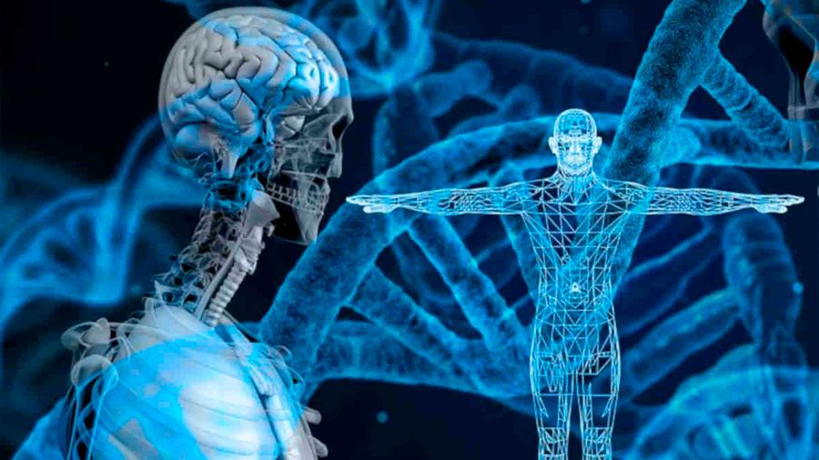 Logran editar células madre directamente en el cuerpo del paciente