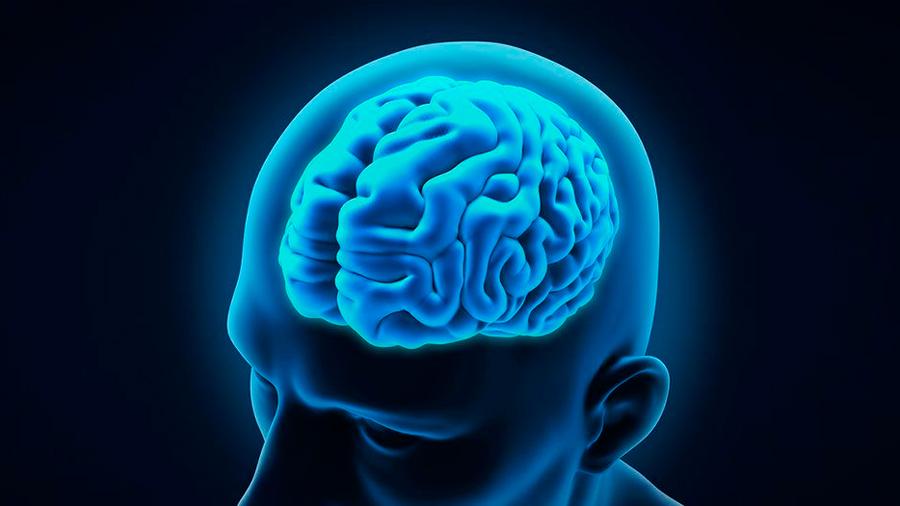 Crean organoides de la corteza cerebral y abren nuevas fronteras en neurociencia