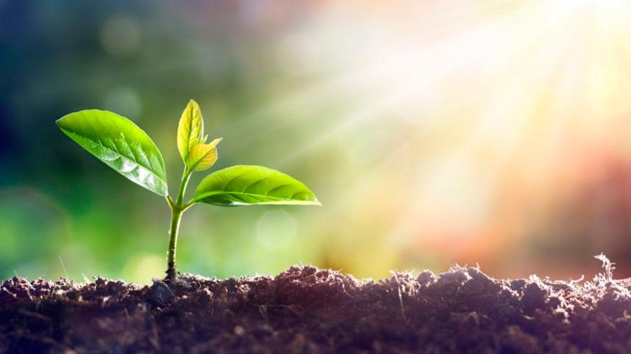 """La desaparición de especies de plantas es 500 veces más rápida que la considerada tasa """"natural"""" de extinción"""