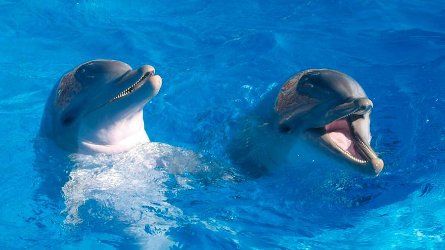 Canadá prohibirá el cautiverio de mamíferos marinos como delfines, ballenas o marsopas