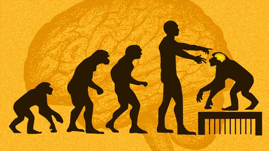 Nueva polémica china por introducir genes de la inteligencia en monos