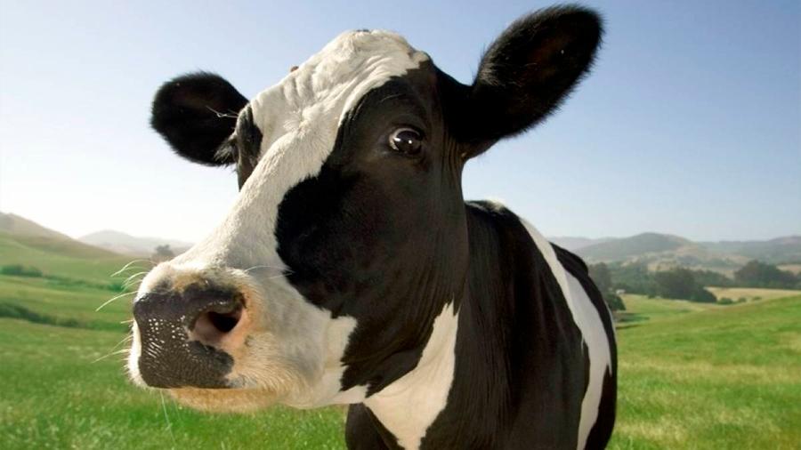 Científicos argentinos usan Crispr para modificar genéticamente vacas y hacer que generen más carne