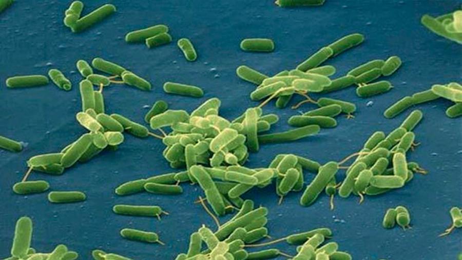 Cambio climático arrastra bacterias que comen carne a las playas