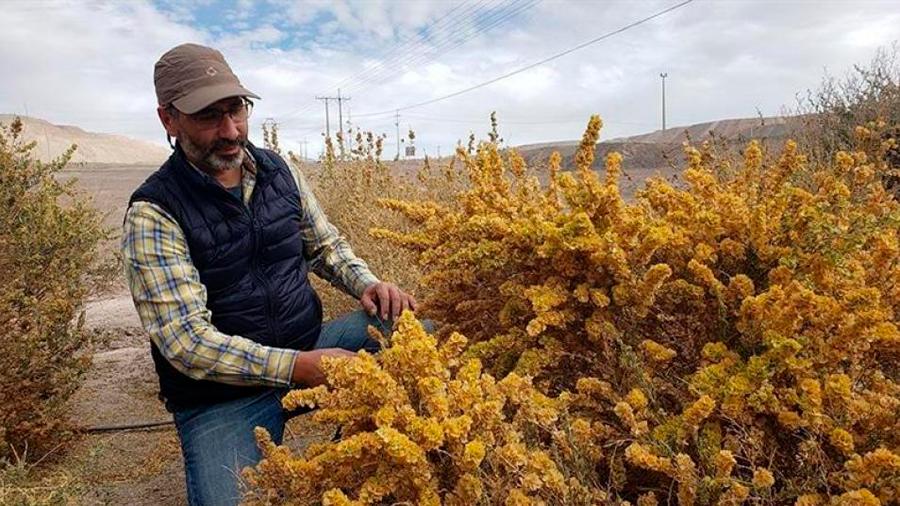 """Científico chileno creó un """"desierto verde"""" para combatir el cambio climático"""