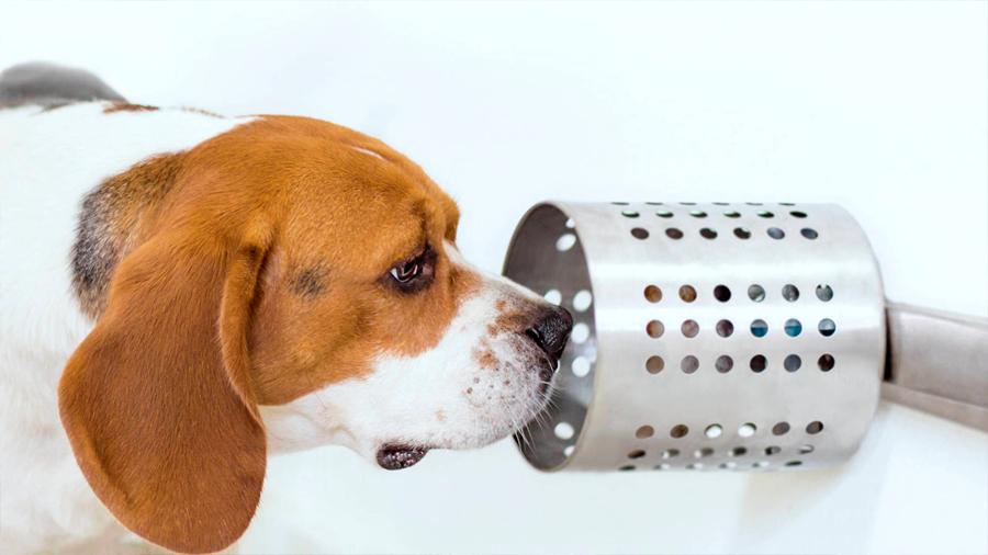 Científicos logran que perros detecten el cáncer de pulmón