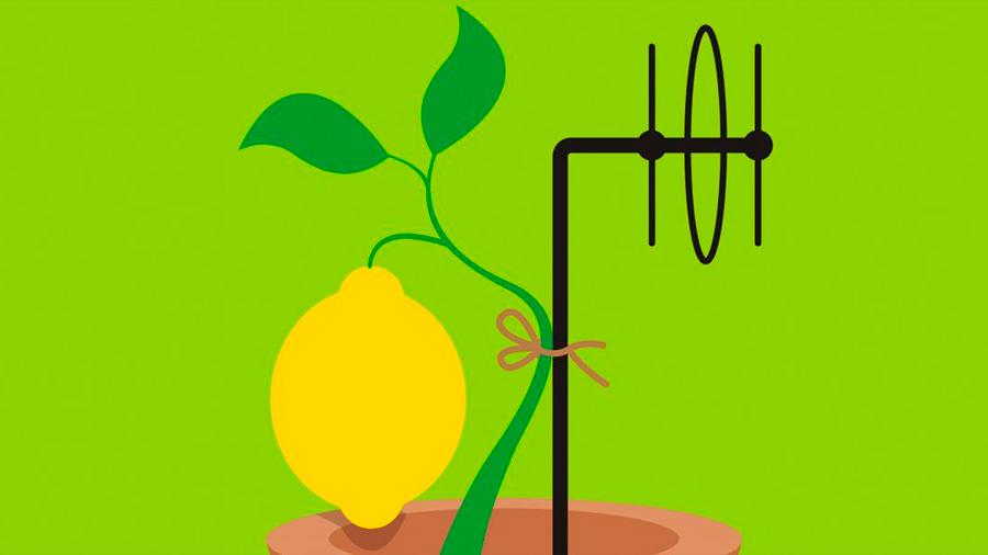 """Vía sensores convierten limones en """"estaciones de radio"""" que indican cuándo el árbol necesita riego"""