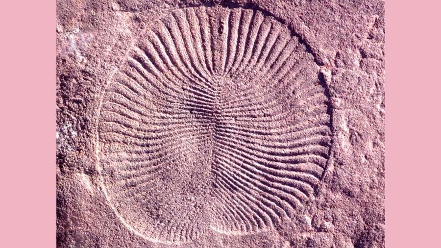 Animales ya se movían solos para comer hace 550 millones de años