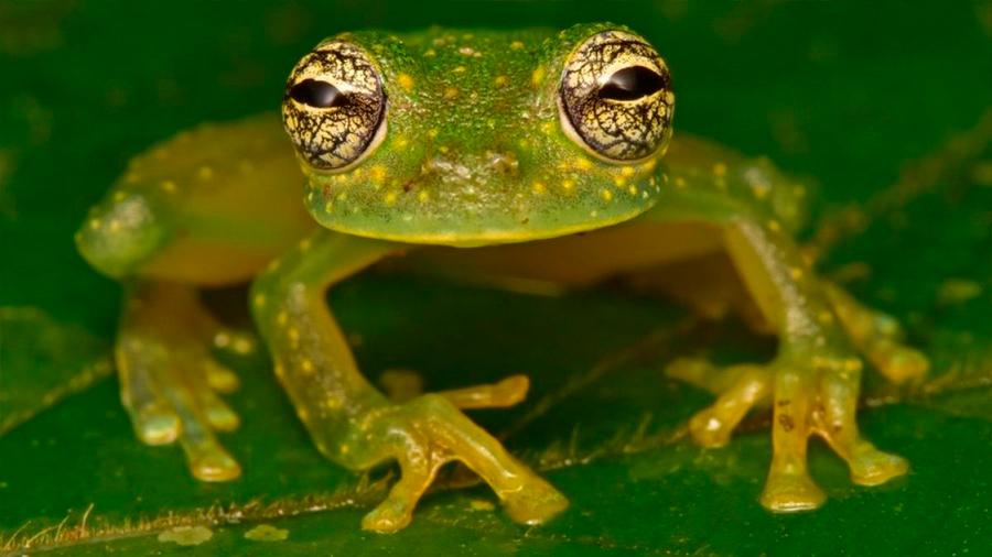 """Hallan animales que se creían extintos en la """"Ciudad perdida del Dios Mono"""" en Honduras (uno podría ser especie nunca vista)"""