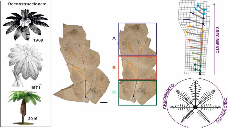 Logran reconstruir un helecho de hace 129 millones de años