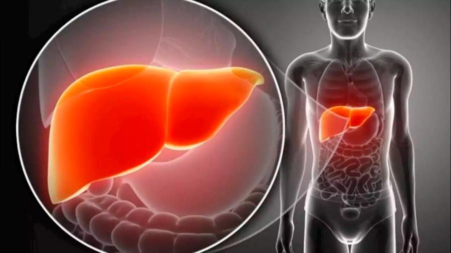 Identifican células que regeneran el tejido hepático tras una lesión