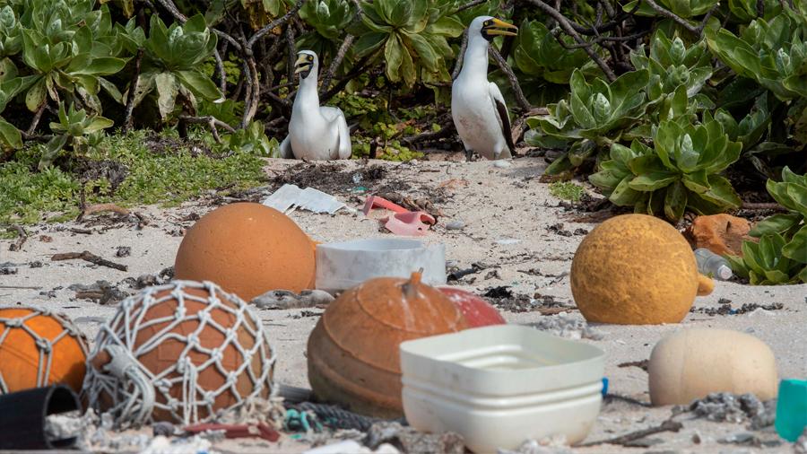 """Isla Henderson, alguna vez """"ecología intacta"""", se ahoga en plásticos"""