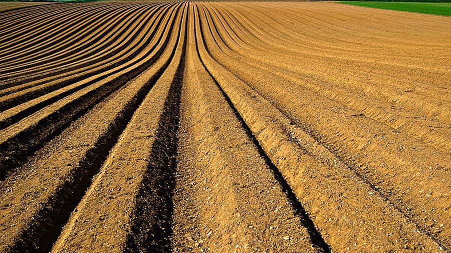 Cultivar carbono: la polémica estrategia contra el cambio climático