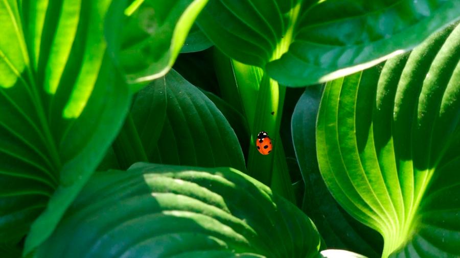 Las plantas no piensan, crecen: no a la teoría de la conciencia vegetal