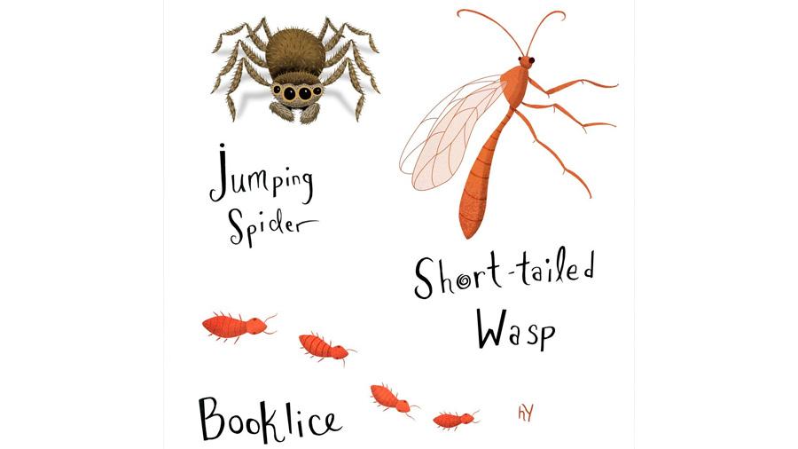 Con una app, censarán a los insectos que viven en las casas