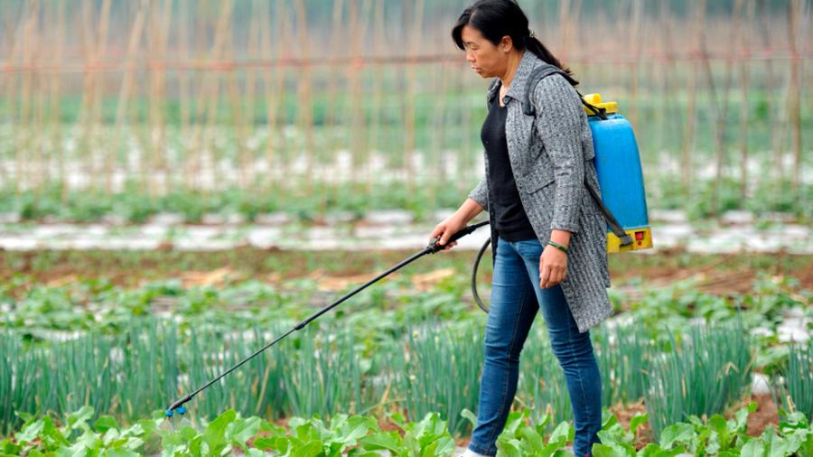 Aplican científicos chinos edición genética para mutar la soja