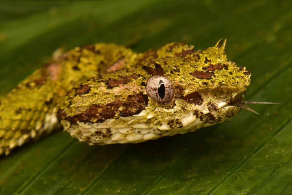 Detectan animales nunca vistos en una selva hondureña